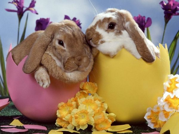 happy-easter-two sweet-hare