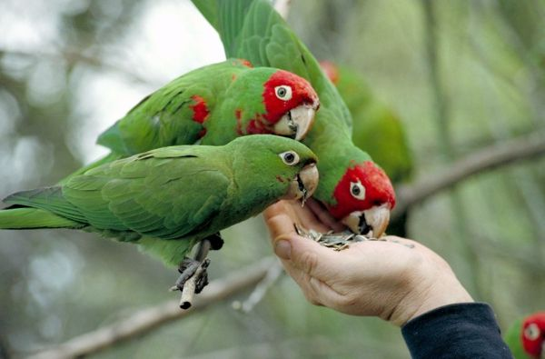 Green Parrot Colorful Parrot Parrot-paintings-