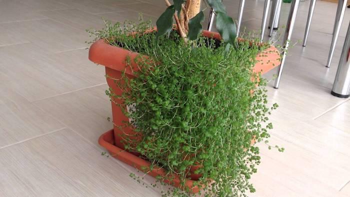 super kamerplanten voor weinig licht en hun plaats