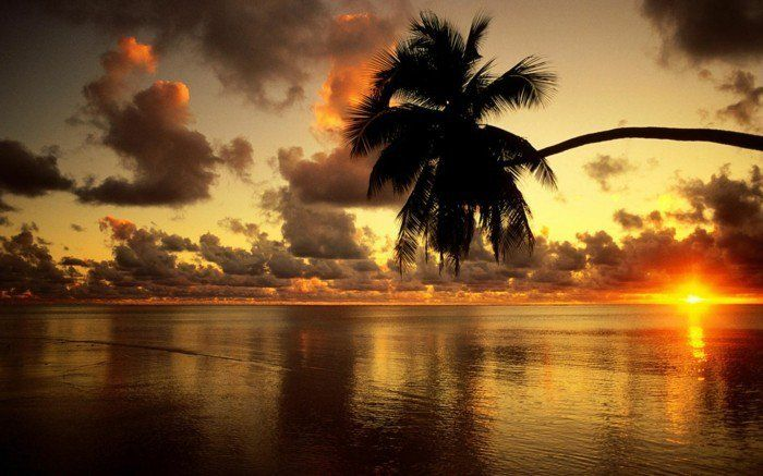 mooi behang met zon-sunset-and-palm