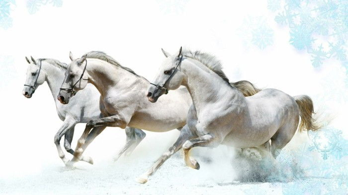Beautiful-häst pictures-tre-white-horse