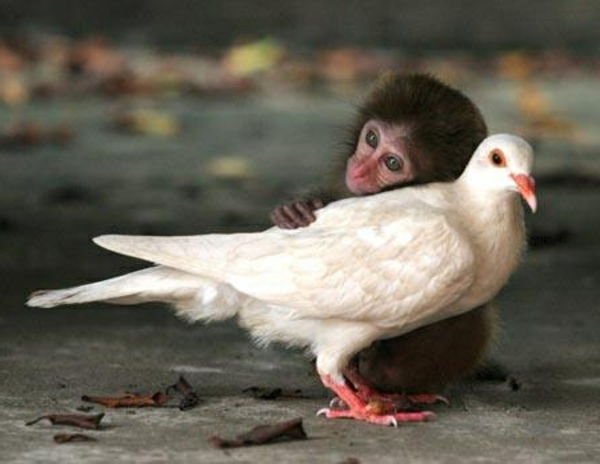 Fotografie: beautiful animal - a little monkey and a white dove