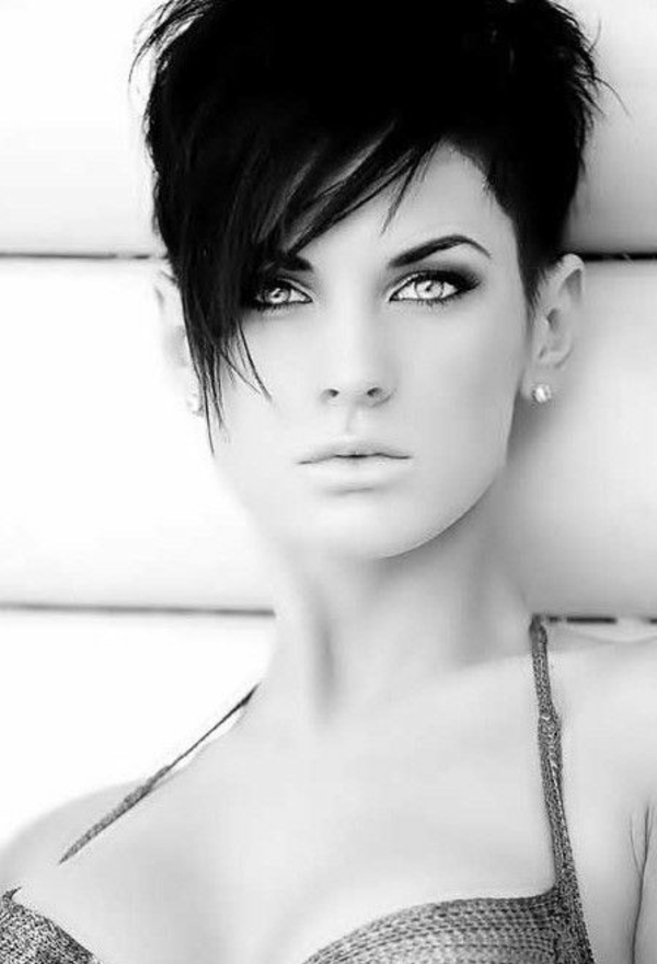 zwart-short-hair
