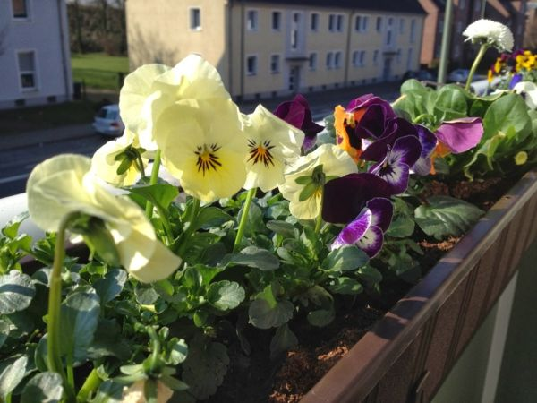 Pansy-impianto-by-a-bel-balcone