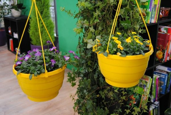 Pansy-impianto-due gialli-hanging-pots